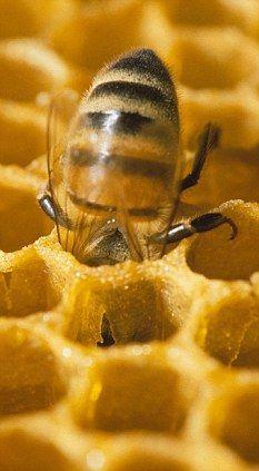 Bijenbaan